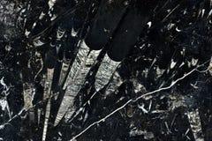 真正的自然大理石尼罗Fossile纹理样式 ?? 库存照片