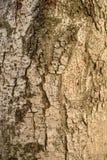 真正的自然木纹理和表面背景 免版税库存图片