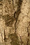 真正的自然木纹理和表面背景 免版税库存照片
