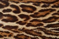真正的豹子毛皮背景 免版税库存图片