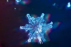 真正的雪花宏观射击从真正的冬天 免版税库存照片