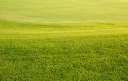 真正的高尔夫球区 免版税库存图片