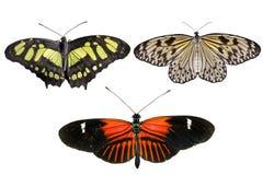 真正的蝴蝶在白色背景-集合02分离 免版税库存图片