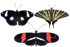 真正的蝴蝶在白色背景-集合04分离 免版税图库摄影