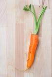 真正红萝卜 库存图片