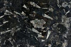 真正自然 '尼罗Fossile'纹理样式 免版税库存照片