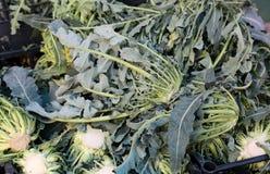 真正绿色硬花甘蓝北意大利要求销售在gre 图库摄影