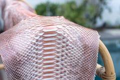真正Python snakeskin皮革,蛇皮,纹理背景 在背景的游泳池 库存图片