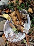 真珠色的叶子 库存照片