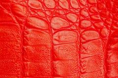 真皮特写镜头纹理,被装饰在皮肤下一条红色鳄鱼 库存照片