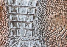 真皮特写镜头纹理,被装饰在鳞皮肤下一只浅褐色的爬行动物,鳄鱼,趋向异乎寻常 库存照片