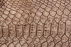 真皮特写镜头纹理,被装饰在鳞皮肤下一条浅褐色的鳄鱼,背景 图库摄影