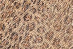 真皮纹理背景特写镜头,被装饰在皮肤下豹子的一个美好的样式,自然树荫 免版税库存照片