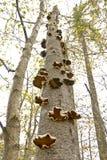 真菌上升 免版税库存图片