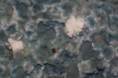 真菌出现在被损坏的食物 免版税库存图片