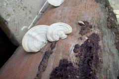 真菌和毒蘑菇 免版税库存图片