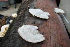 真菌和毒蘑菇 库存照片