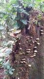 真菌和藤 免版税库存照片