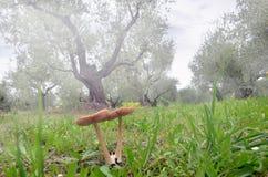 真菌在草坪 免版税库存图片