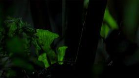 真菌在黑暗中打开 它增长变得光亮 免版税库存图片