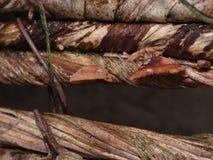 真菌垂悬的篮子 宏观-图象 库存照片