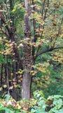 真菌是美妙的 免版税库存图片