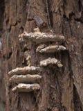 真菌木头 库存照片