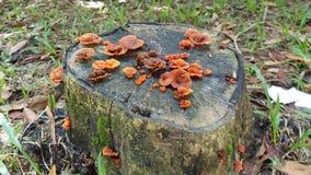 真菌树桩结构树 免版税图库摄影