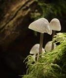 真菌白色 免版税库存图片