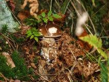 真菌白色 库存图片