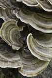 真菌结构树 免版税库存图片