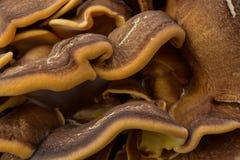 真菌蜂蜜 免版税库存照片