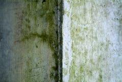 真菌雨织地不很细墙壁 免版税库存照片