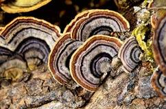 真菌 图库摄影