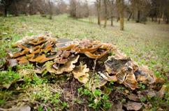 真菌 库存图片