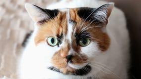 眨眼睛8秒的猫滑稽的射击 影视素材