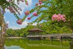 眺望台在奈良 免版税库存照片