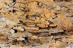 钻眼工人损坏的老木头 图库摄影