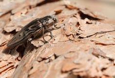 钻眼工人甲虫低角度视图 免版税库存图片