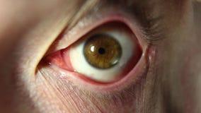 眼珠的眼睛自转 的人眼睛,疯狂的神色特写镜头眨眼睛 股票视频