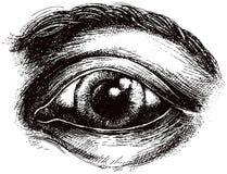 眼睛例证 免版税图库摄影