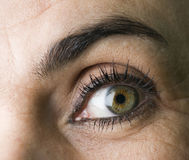 眼睛和眼眉 免版税图库摄影