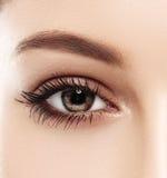 眼睛妇女眼眉注视鞭子 库存照片