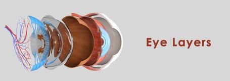 眼睛层数 向量例证