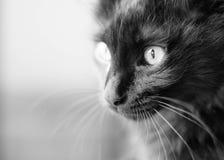 眼睛明亮的小猫 库存图片