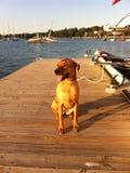 眼睛明亮的狗 免版税库存照片