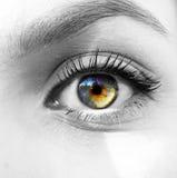 眼睛查出的彩虹分隔的影子白色 免版税库存图片