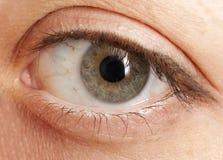 眼睛榛树 库存图片