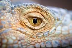 眼睛爬行动物特写镜头 免版税库存图片
