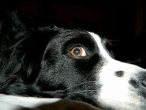 眼睛看见您看我 库存图片